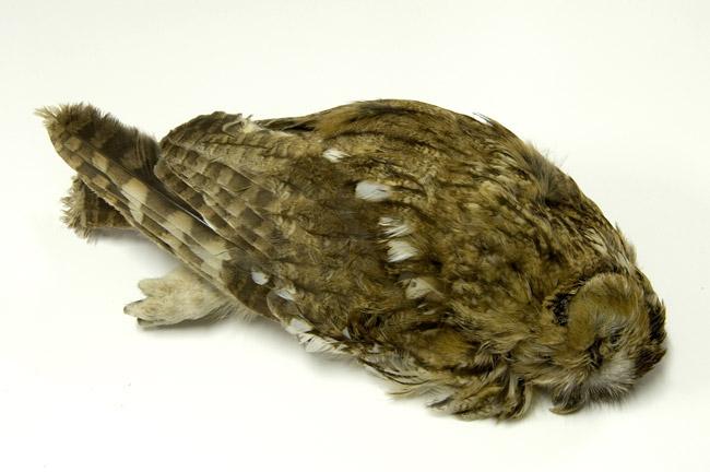 Carsten Höller, Amethist, Garnets, Saphires, Aquamarine, Quartz, Topaz, Rubies, and Turmaline Inside of an Owl