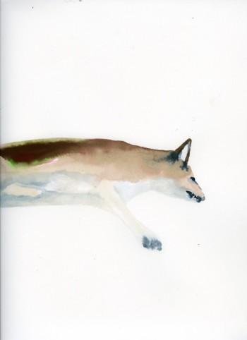 Jessie Mott, Coyote