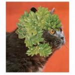 Stephen Eichhorn, Succulents