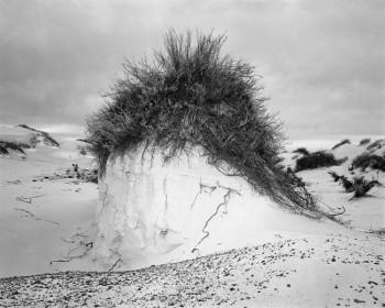 Casey McGonagle, Dune